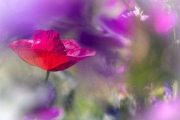 Poppy van Kurt Krause