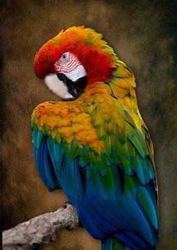 Portrait-Ara in schöner Farbkombination von Bert Hooijer