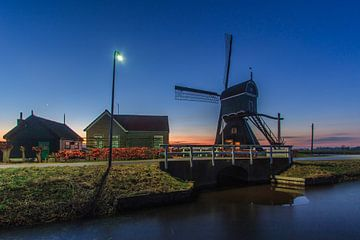 Scene uit de polder van