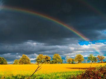 Goud van Miriam Meijer, en plein campagne.....