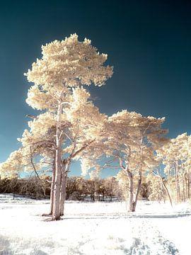 Bomen in de sneeuw van Lex Schulte