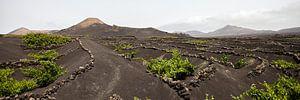 Frisgroene wijnvelden binnenland Lanzarote van Ramona Stravers