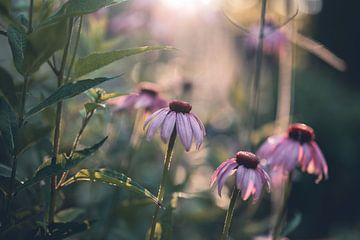 Blumen Teil 174