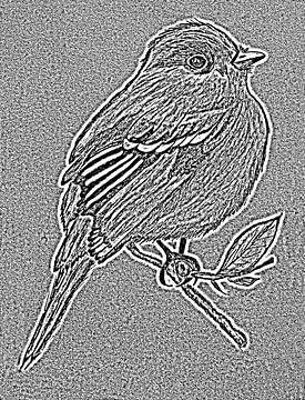 Zeichnung eines Vogels ( Radierung ) von Jose Lok