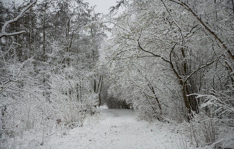 un chemin forestier recouvert d'une épaisse couche de neige sur ChrisWillemsen