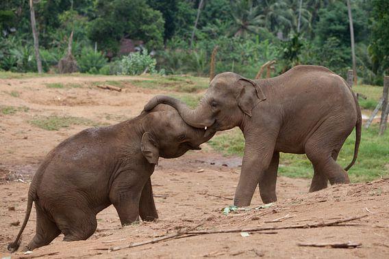 Olifanten van Catching Moments