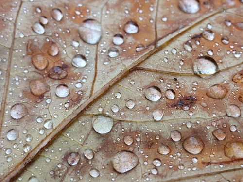 Druppels op herfstblad van