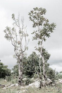 Bäume in der Natur in Westafrika   Benin von Photolovers reisfotografie
