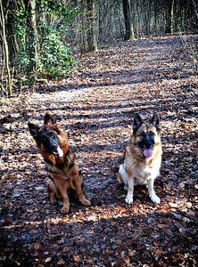 Dogs no. 2