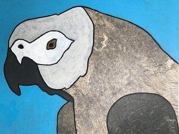 Grauer Papagei von hou2use
