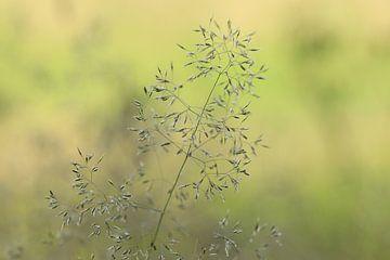 Stillleben Natur von Fotografie Sybrandy