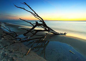 Drijfhout op het strand van Frank Herrmann