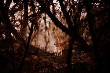 Bambi im Wald von Michiel de Bruin