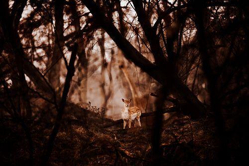 Bambi in het bos