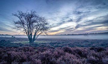 Wunderschöner Sonnenaufgang auf der Hoorneboegse Heide von Connie de Graaf