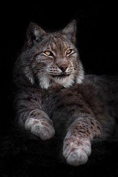 Een prachtige imposante kat lynx ligt met zijn volle gezicht half omgedraaid zijn poten uitgestrekt  van Michael Semenov