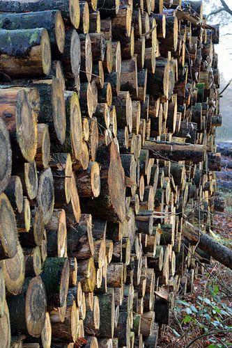 Verloren bos / lost forrest van