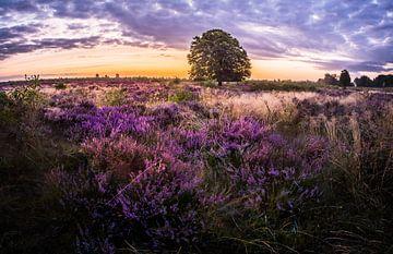 paarse Heide in Ede van Jeroen Mondria