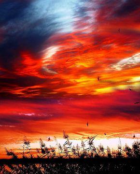 Sonnenuntergang am Langener Waldsee von