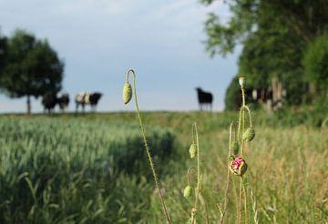 Zomer in de polder van Esther Leijten-Kupers