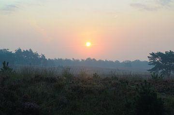 Sonnenaufgang in der Asselse Heide von Wiljo van Essen