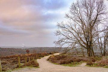 Posbank op een bewolkte ochtend van Tania Perneel