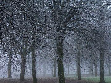 Mistige ochtend in het park met rijp von Anneriek de Jong