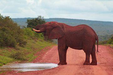 """""""L'éléphant boit une flaque d'eau. sur Capture the Moment 010"""