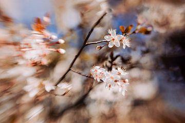 Fresh Blossom van Hiske Boon