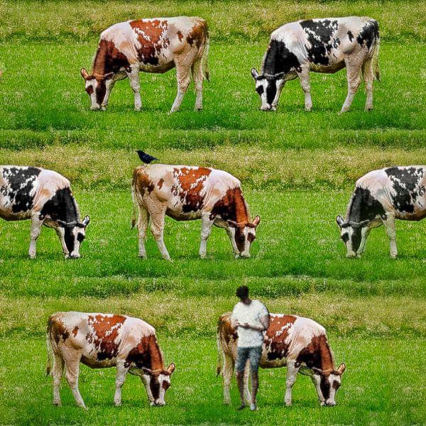 Gekloonde koeien (roodbont en zwartbont stamboekvee) van Ruben van Gogh