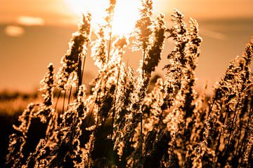 Zonsopgang in de polder van Carina Calis