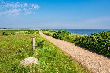 Chemin et prairie à la mer des Wadden à Nebel sur l'île d'Amrum