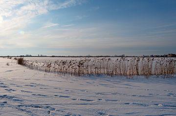 Winters weiland van Alexander van der Sar