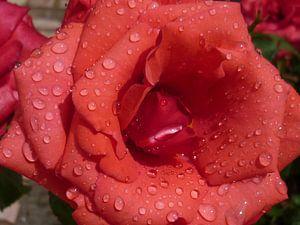 Rode roos van Erna Fotografie