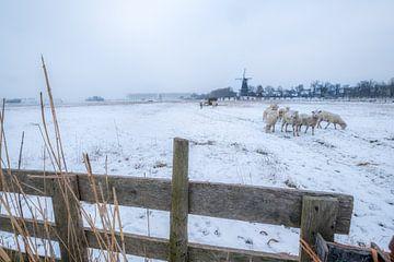 Molen en schapen in winters landschap von Moetwil en van Dijk - Fotografie