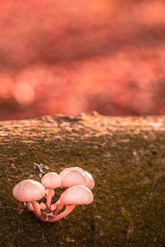 Een bosje paddenstoelen van Nynke Nicolai