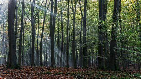 Zonneharp in het herfstbos