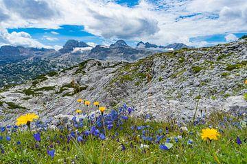 Berglandschap met gele en paarse bloemen van Floris Kok