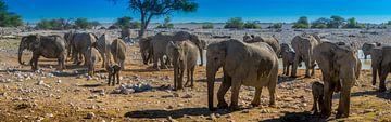 Panorama van een kudde olifanten in Etosha Nationaal Park, Namibië van Rietje Bulthuis