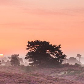 Sfeervolle zonsopkomst op de bloeiende heide van Karla Leeftink
