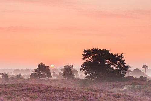 Sfeervolle zonsopkomst op de bloeiende heide