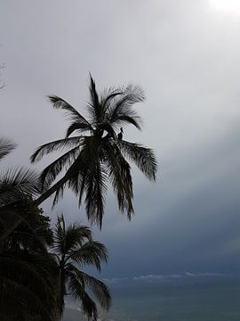 Pelican palm van Joelle van Buren