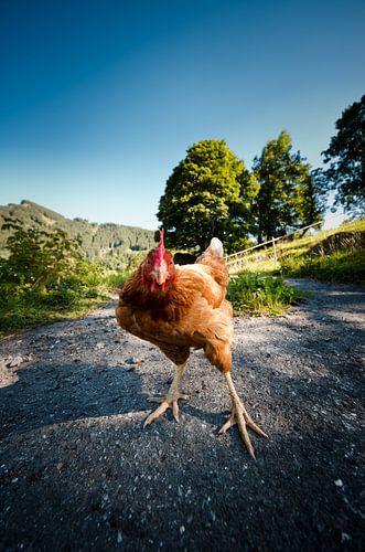 Zwitserse kip van