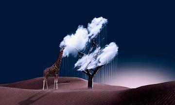 De smaak van de wolk van Catherine Fortin