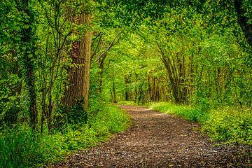 Wandelpad door het bos van Rietje Bulthuis
