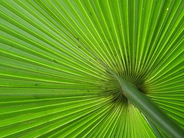 Groen van Odette Kleeblatt