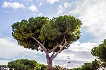 Parasolden in Rome van Sander de Jong