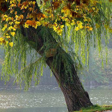 autumn tree van Bernd Hoyen