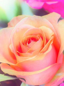 roos von Wilfred Roelofs