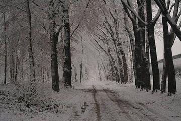 Laan in de sneeuw  winters tafereel  van Klaas Dozeman